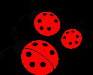 ladybugzzzz